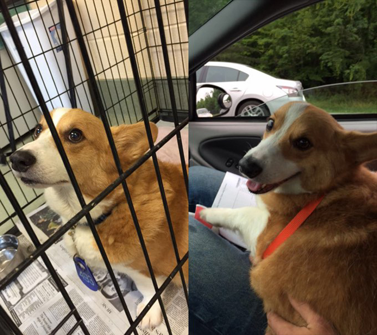Adopted Shelter Dogs Happy
