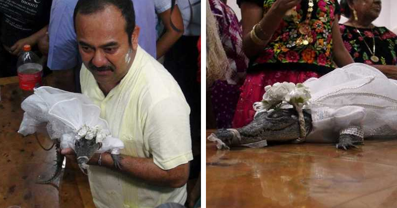 Mexican Mayor Marries Princess The Crocodile To Bring Good Luck