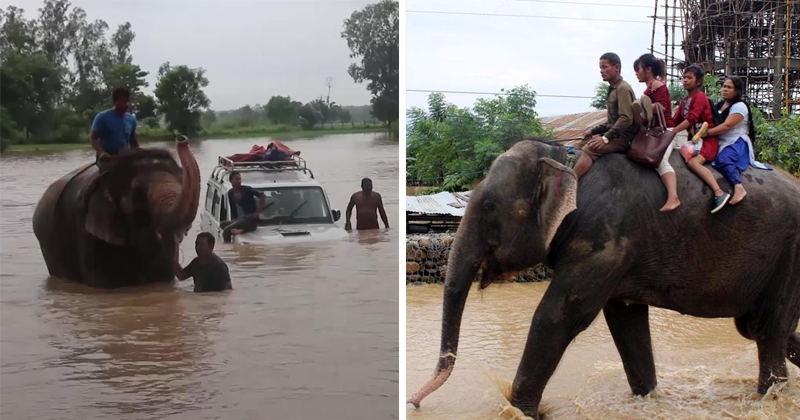 Tourist In Flooded Nepal Rescued By Elephants