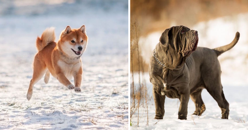 20+ Trendiest Dog Breeds To Own