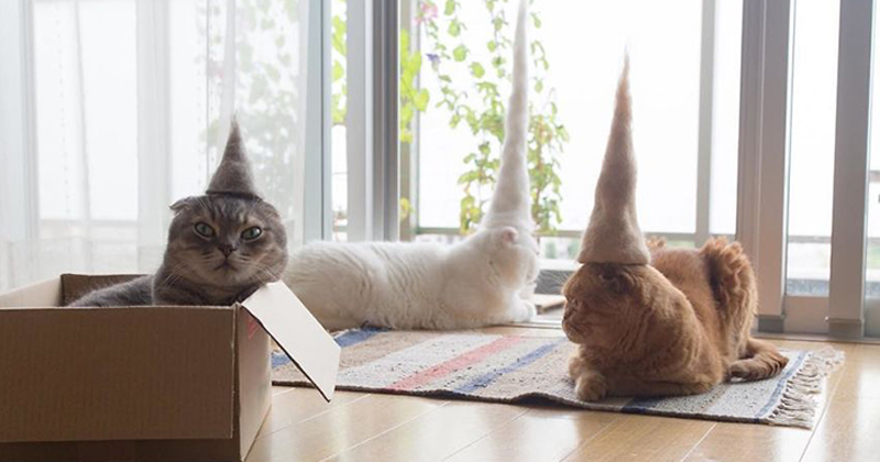 10 Cats Wearing Hats Made From Their Own Fur!