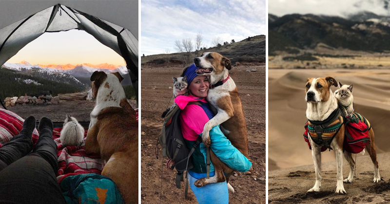 Photos Of Cat And Dog Who Travel Together Will Melt Your Heart