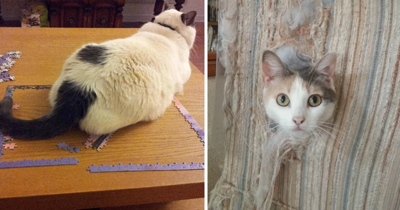 25 Things That Will Happen Only To Cat Owners