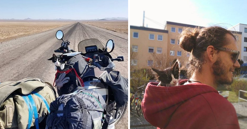 Man Adopts Starving Kitty, Finds Awesome Travel Companion