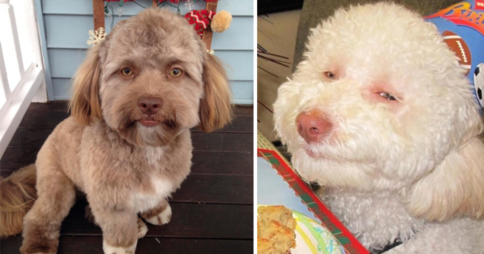 10+ Dogs That Will Freak You Out With Their Human Faces