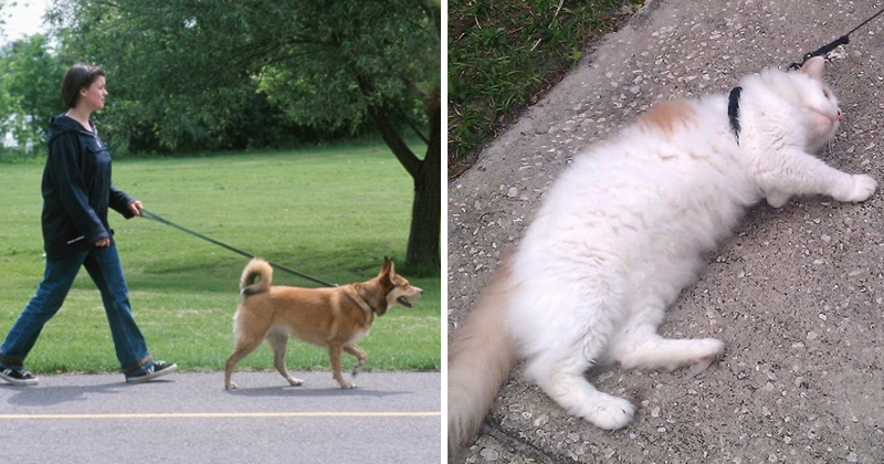 10 Differences Between Cats And Dogs That Every Owner Would Know
