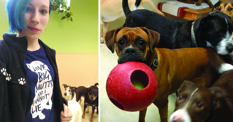 Can You Not Envy This Doggy Daycare Worker And His Puppy-filled Day?