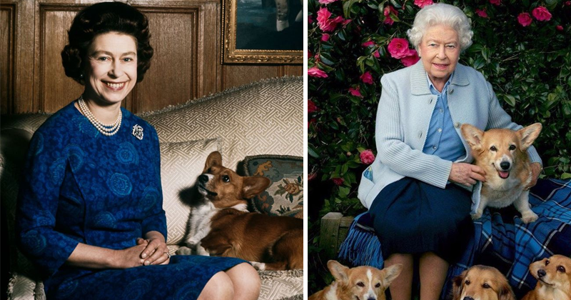 Last Of The Queen's Corgis Dies