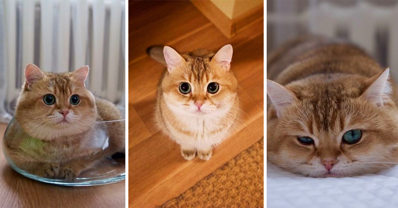 Hosico Makes Everyday Caturday